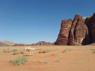 Iordania, o destinație exotică