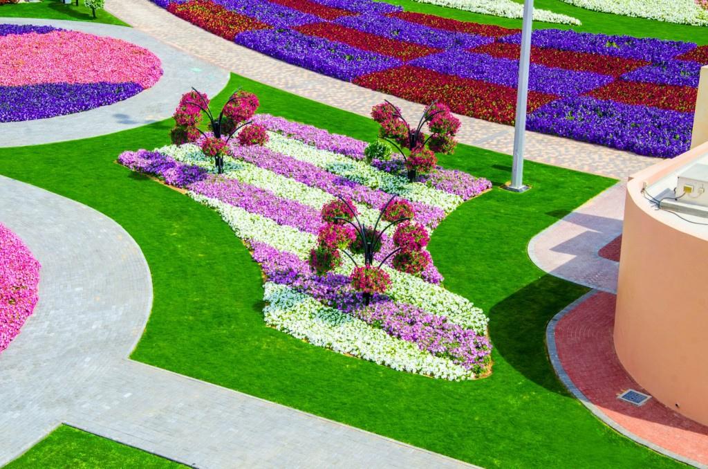miracle garden dubai11
