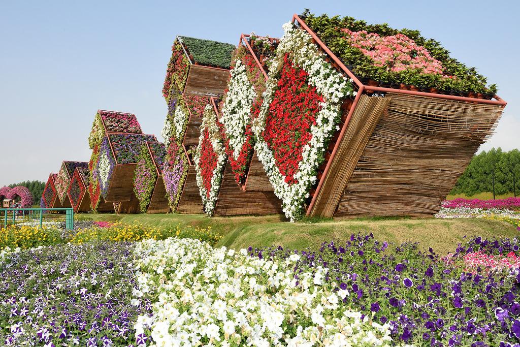 miracle garden dubai4