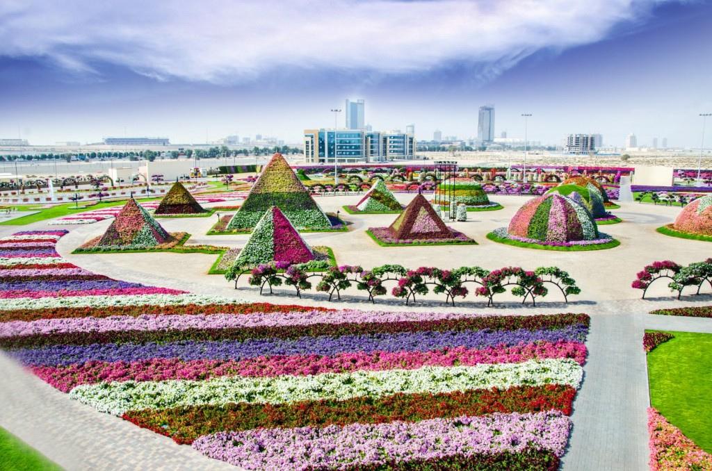 miracle garden dubai5
