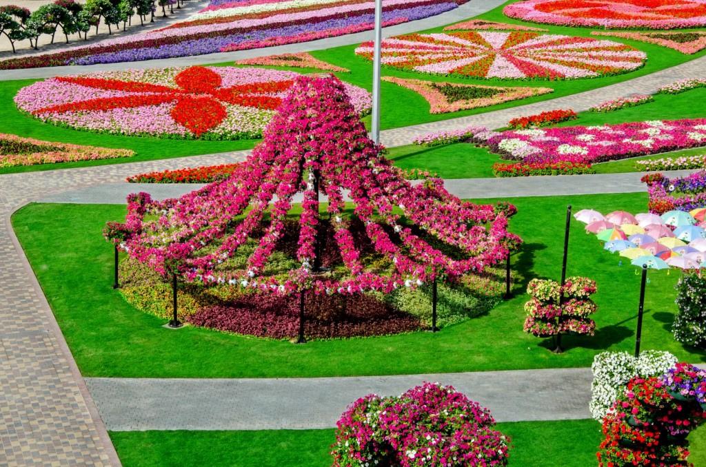 miracle garden dubai6