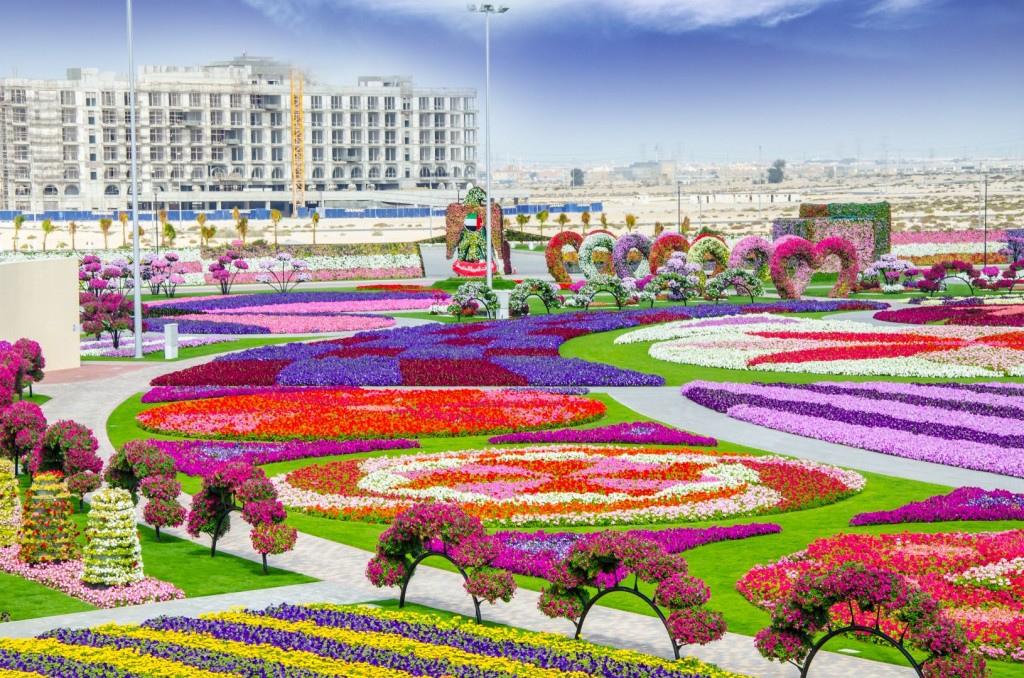 miracle garden dubai7