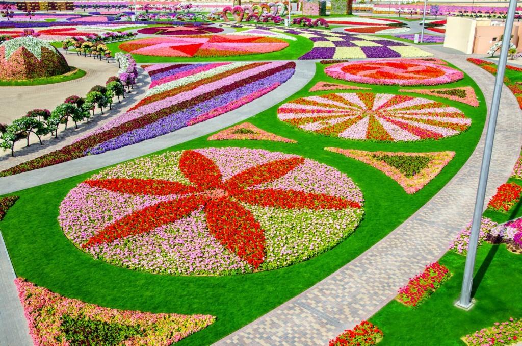 miracle garden dubai8