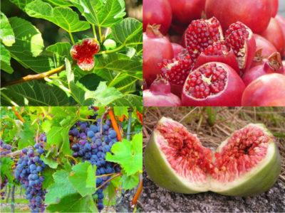 Fructele menționate în Biblie sunt elixire ale sănătății