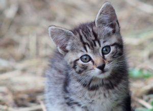 Pisicile protejează casa de energiile negative și de deochi
