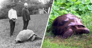 Cel mai bătrân animal de pe planetă este o țestoasă și are 187 de ani