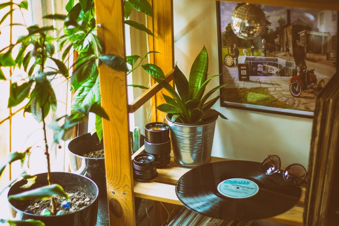 Sfaturi pentru întreținerea plantelor de apartament
