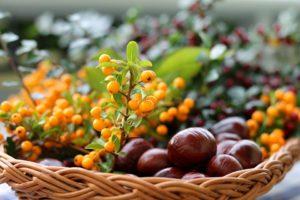 Plante medicinale care trebuie consumate în special toamna
