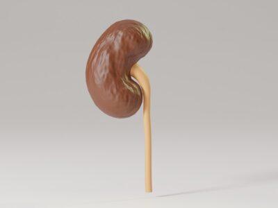 Alimentele care trebuie evitate pentru a preveni deteriorarea rinichilor