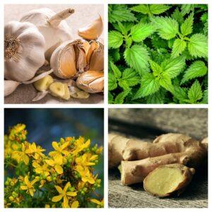 plante pentru imunitate